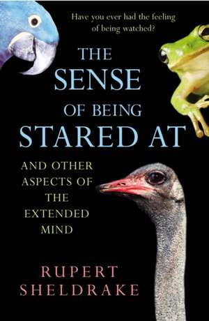 The Sense Of Being Stared At imagine