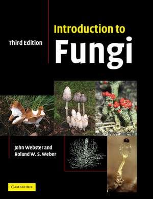 Introduction to Fungi imagine