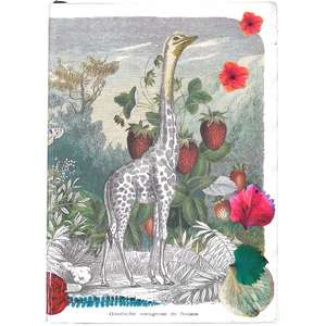 Wild Nature A6 Softcover Notebook