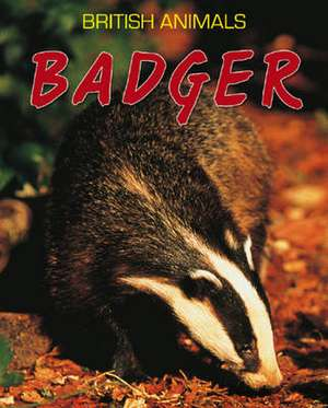British Animals: Badger