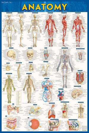 Anatomy-Paper