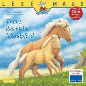 Thore, das kleine Islandpferd