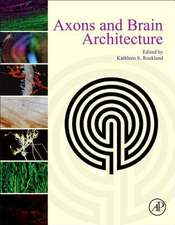Axons and Brain Architecture