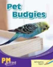 Pet Budgies PM Writing 1 Yellow/Blue 8/9