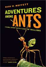 Adventures among Ants – A Global Safari with a Cast of Trillions