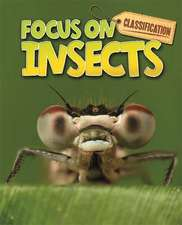 Classification: Focus on: Insects