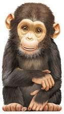 Little Chimp:  An Illustrated History