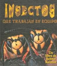 Insectos Que Trabajan En Equipo