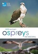 Rspb Spotlight Osprey