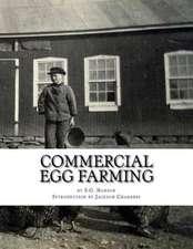 Commercial Egg Farming