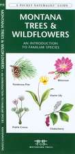 Montana Trees & Wildflowers: An Introduction to Familiar Species