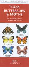 Texas Butterflies & Moths:  An Introduction to Familiar Species