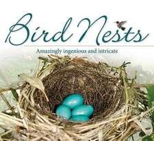 Bird Nests:  Amazingly Ingenious and Intricate