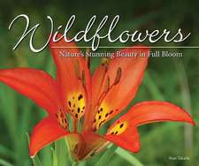 Wildflowers: Nature's Stunning Beauty on Display