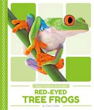 Rain Forest Animals: Red-Eyed Tree Frogs