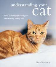 Understanding Your Cat: How to interpret what your cat is really telling you