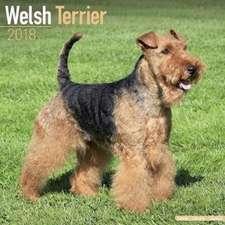 Welsh Terrier Calendar 2018