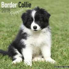 Border Collie Puppies Calendar 2018