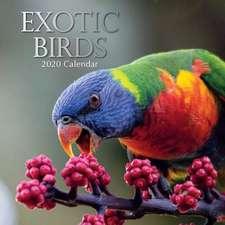 EXOTIC BIRDS 2020