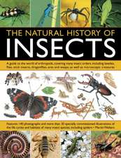 The Natural History of Insects