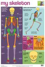 My Skeleton Wallchart