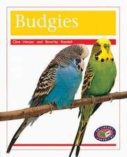 Budgies PM Non Fiction Amimal Facts Level 16 Pets Orange