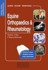 Equine Orthopaedics & Rheumatology