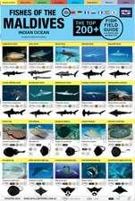 Maldives Fish Field Guide