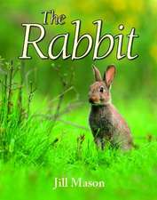 The Rabbit:  A British Vet in Africa