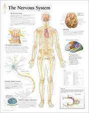The Nervous System Chart:  Laminated Wall Chart