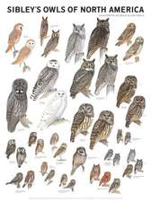 Sibley's Owls of North America