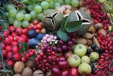 555 Obstsorten für den Permakulturgarten und -balkon