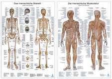 Anatomie-Lehrtafeln im Doppelpack ' Die menschliche Muskulatur ' und  ' Das menschliche Skelett '