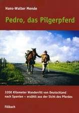 Pedro, das Pilgerpferd