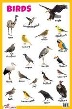 Birds Educational Chart